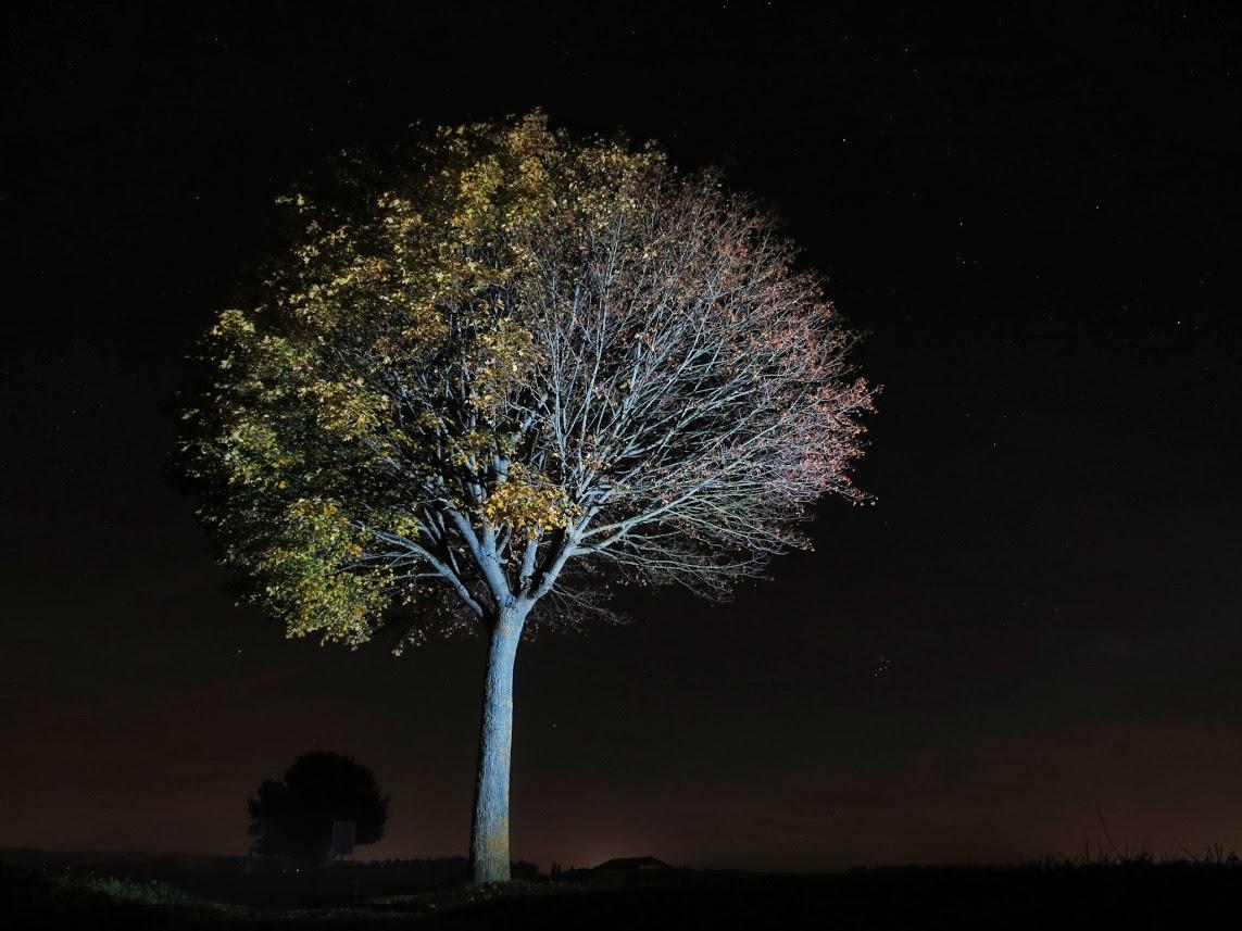 Baum Led Lenser M7