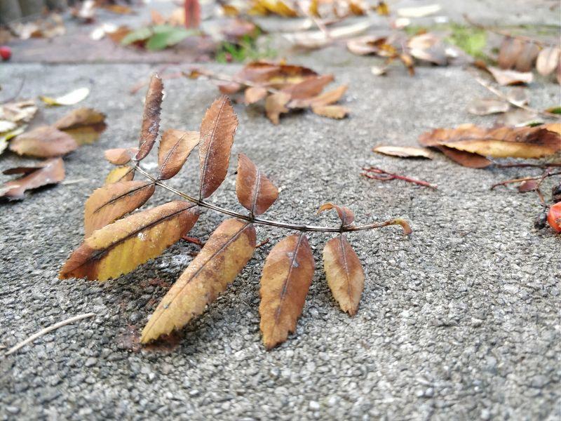 Herbstlaub unbearbeitet