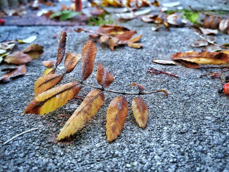 Herbstlaub bearbeitet