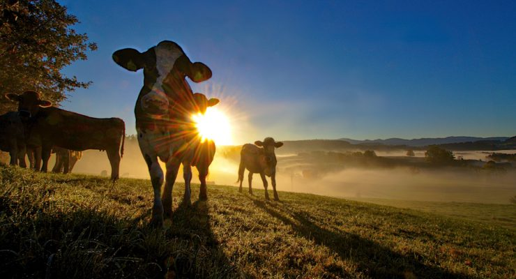 Artikelbild Blaue Elise on Tour: Herbstliches Wandern rund um Isny und Umgebung