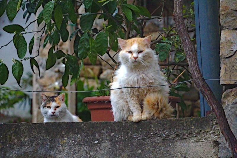 Lepa Vida Slowenien Katzen